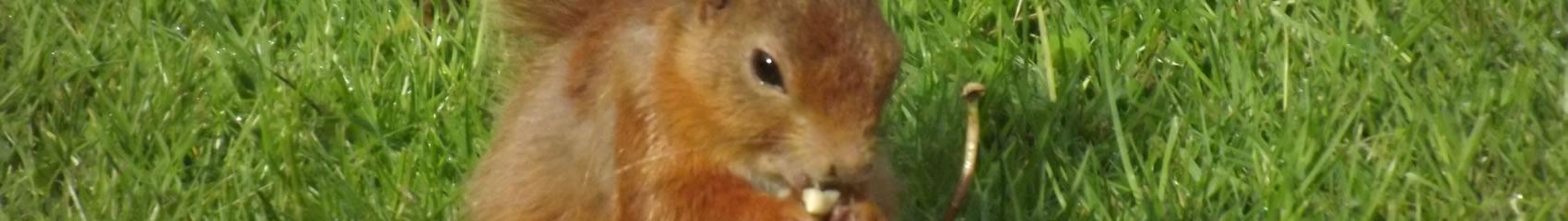 squirrel-slider-20